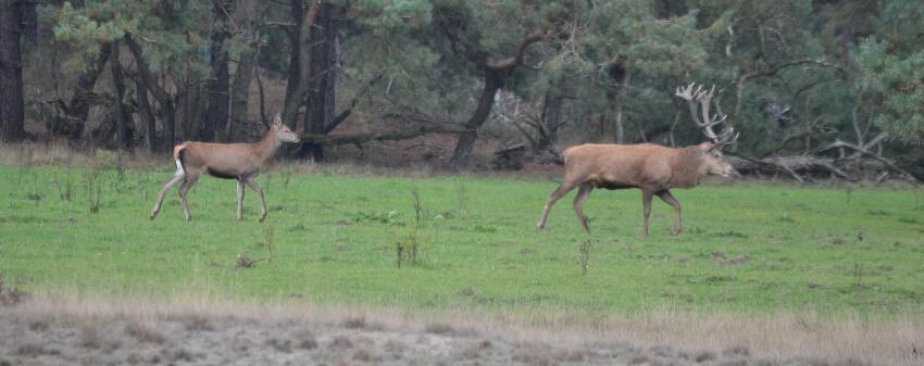 D = Deer