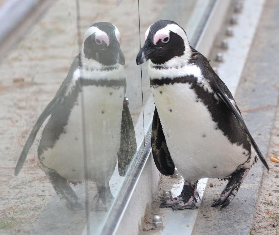 Ani-Pic ~ Pinguïn